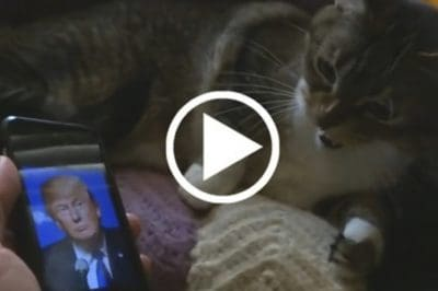 [Watch] These Pets Flip Out When They See Donald Trump