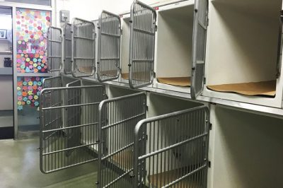 A Boston Shelter Was Extremely Happy To Share This Photo, And Here's Why