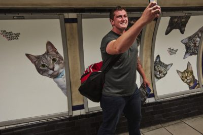 Photos Of Cats Replace Ads In London Subway Station — And They're All Up For Adoption