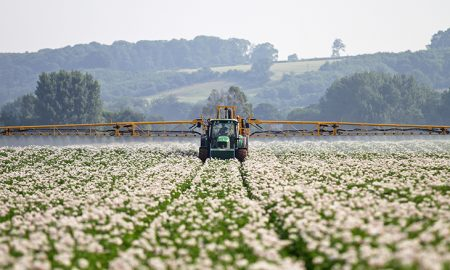 cottonspraying
