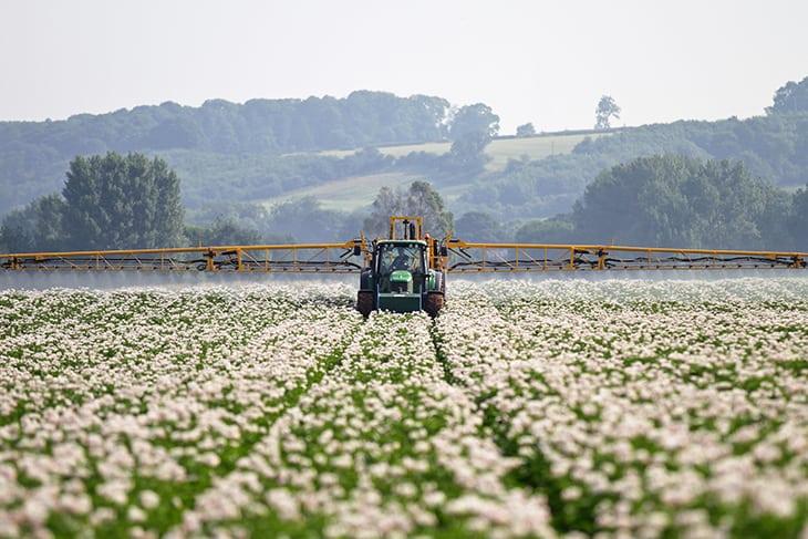 cottonspraying