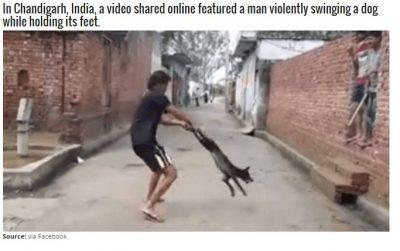 Social Media Manhunt For Four Men Who Tortured Dog
