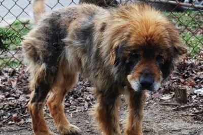 Senior Dog Escapes Filthy Yard And Finds Help For His Sick Siblings