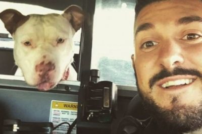 Thoughtful Cop Takes Selfies With Lost Dogs To Help Find Their Humans