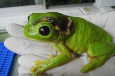Animal-Lover Accidentally Runs Over Frog, Then Flies Him Across The Country For Surgery