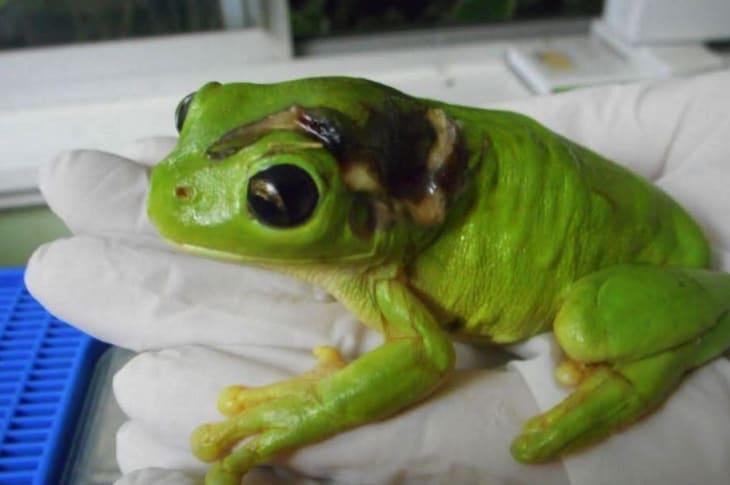 Credit: Frog Safe, Inc.