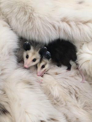 Credit: The Fund For Animals Wildlife Center