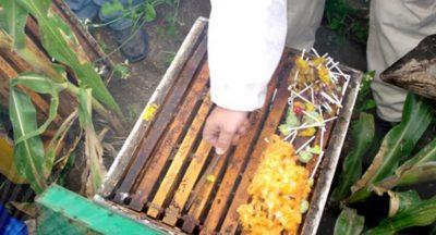 sugarcandyhive