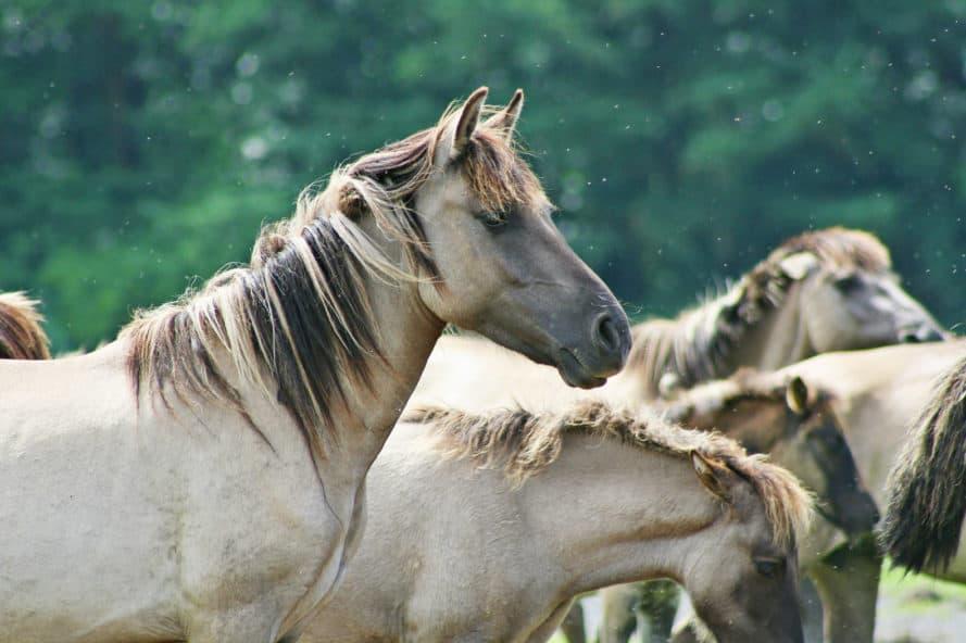 wild-horses_cred-inhabit