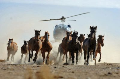 BLM Backs Out Of Wild Horse Slaughter But Problems Persist