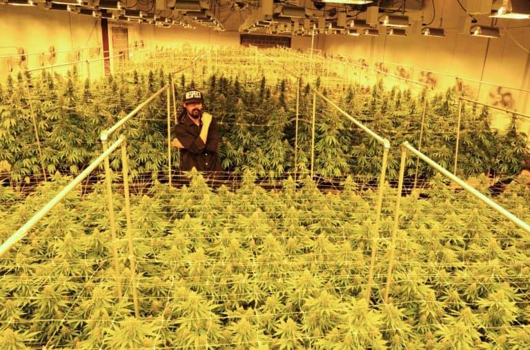marihuana Marley