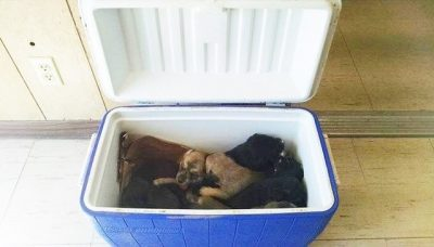 Woman Stops On Side Of Road To Retrieve Cooler, Finds 9 Puppies Inside