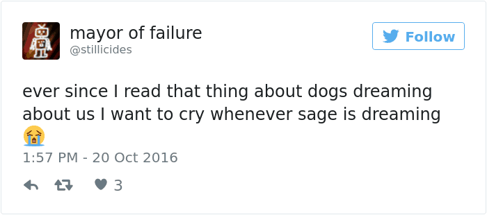 dogsdream2