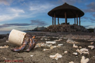 Beaches Are So Polluted That Hermit Crabs Are Using Bottle Caps As Homes
