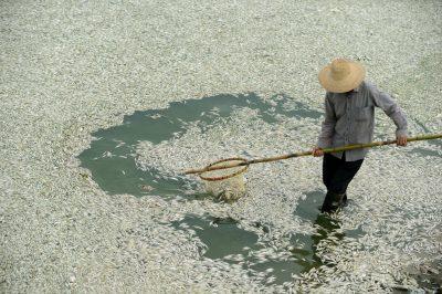 chinariverfishkillammonia