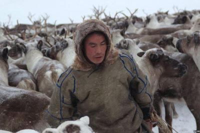 Russia Plans To Kill 250,000 Reindeer After Ancient Disease Resurfaces