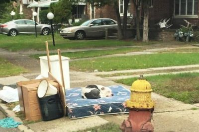 Dog Waited Faithfully For Over A Month After His Owners Left Him Behind
