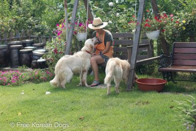Credit: Free Korean Dogs