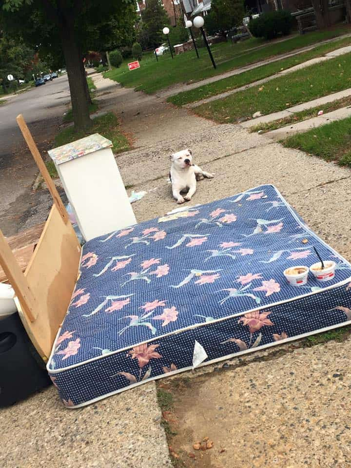 Credit: Detroit Youth and Dog Rescue