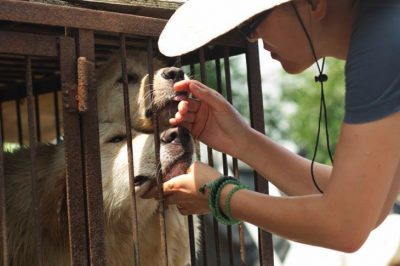 Families Sold Unwanted Pets To Dog Meat Farm, But Now They're Getting A Second Chance