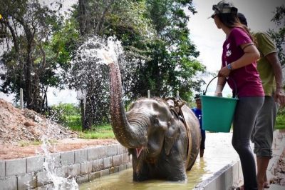 Elephant Forced To Give Rides Now Spends Her Days Healing In Water Therapy