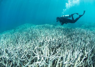The Great Barrier Reef Is NOT Extinct, But Humans Need To Act Now To Save It