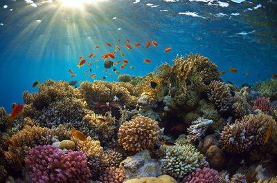 healthy-reef