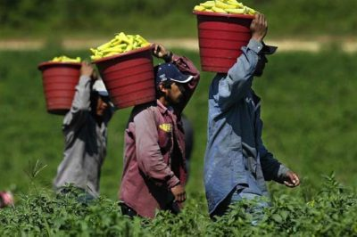 GMO Corporations Violate Human Rights And Break Federal Law Repeatedly In Horrible Migrant Labor Camps