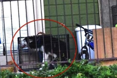 Woman Takes To Facebook To Save One Husky—Ends Up Saving 13 Animals