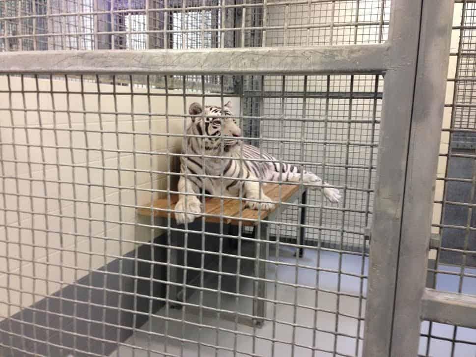 Credit: Animal Legal Defense Fund