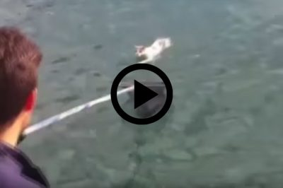 Boat Crew Brilliantly Rescues Tired Cat Found Lost At Sea [Watch]