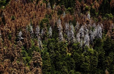 New Aerial Survey Reveals California Forests Are Dying At Alarming Rate