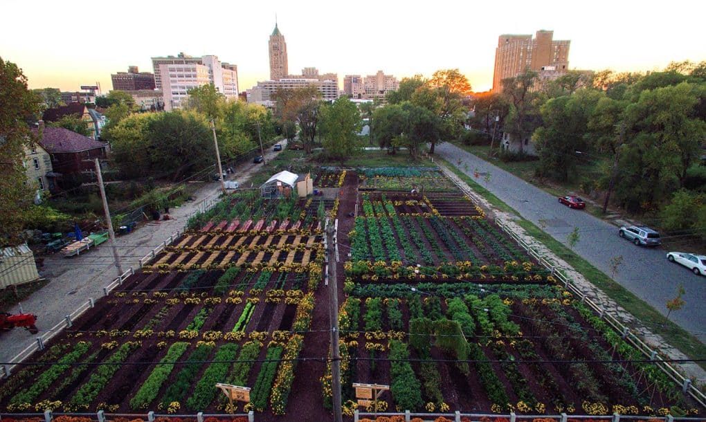 Credit: Michigan Urban Farming Initiative