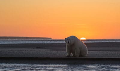Photos Of Arctic With No Snow Convey Disturbing Reality Of Climate Change