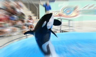 SeaWorld's First Non-U.S. Park To Open In Abu Dhabi, Will Be Whale-Free