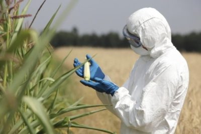 Court Rules Local Governments Can Ban GMO Crops In Spite Of Federal Laws