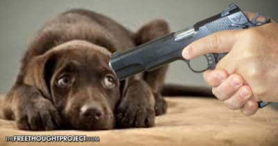 Court Rules Police Can Legally Execute Your Dog If It Does Anything, But Sit Silently