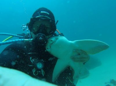 This Australian Diver's Good Friend Is A 6-Foot-Long Shark