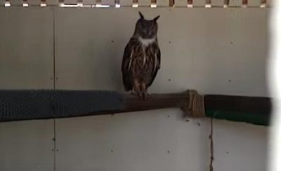 Owl From Harry Potter Now Lives In Horrendous Conditions [Watch]