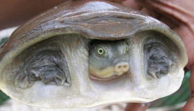 Largest Wildlife Bust In The Nation Reveals 6,000 Turtles Enroute To Slaughter