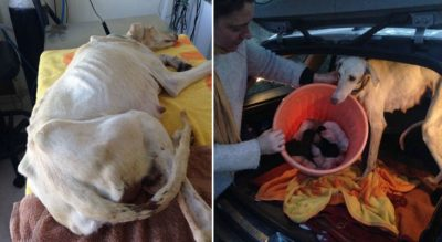 Mother Dog With Broken Leg Leads Veterinarian 2 Miles To Newborn Pups