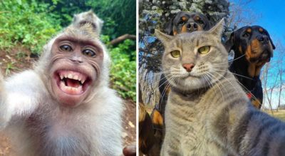 25+ Animals That Take Better Selfies Than Most Humans