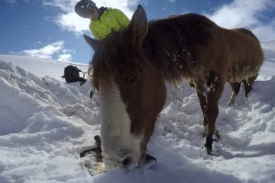 Compassionate Snowboarders Rescue Lost Horse From Freezing To Death