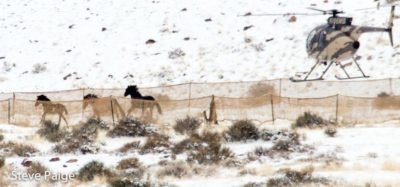 Federal Government To Round-Up Thousands More Wild Horses In 2017