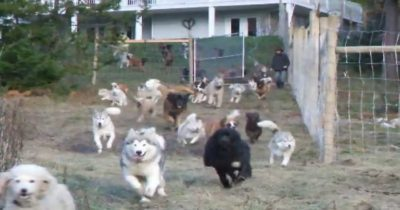 Animal Lover Adopts 45 Dogs, Builds Them A 4-Acre Running Space [Watch]