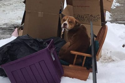 Dog Abandoned With Curbside Trash Just Wanted Love And Warmth For The Holidays