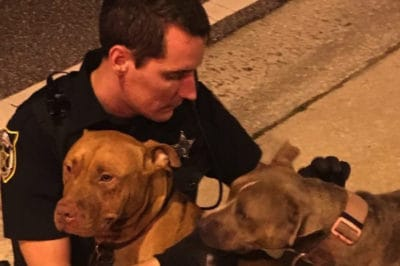 Cops Comfort A Pair Of Abandoned, Injured Pit Bulls While Waiting For Help