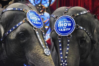 Breaking: Ringling Bros. Closes Circus For Good After 146 Years Of Entertaining