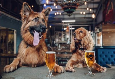 Beer Company Begins Offering Paid Puppy Leave To All Employees