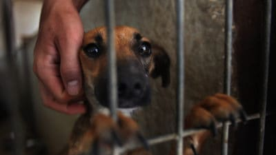 San Francisco Bans The Sale Of Non-Rescue Cats And Dogs In Pet Stores